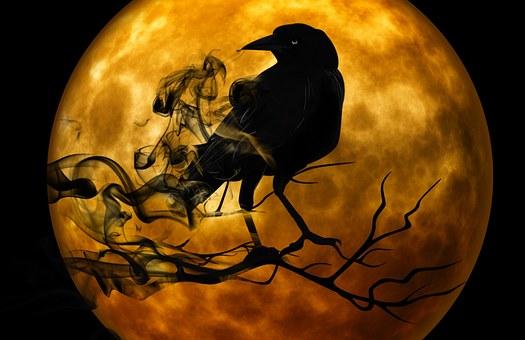 raven-988218__340