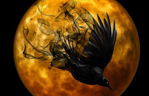 raven-988221__340