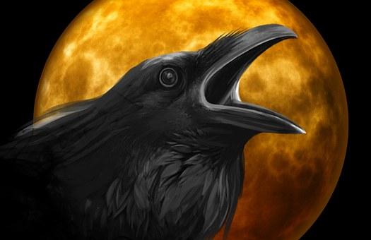 raven-995208__340